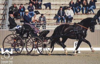 Mistrzostwa Świata Młodych Koni wPowożeniu